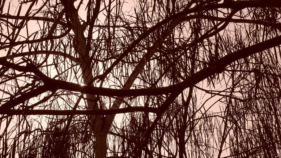 trees-19013_960_720